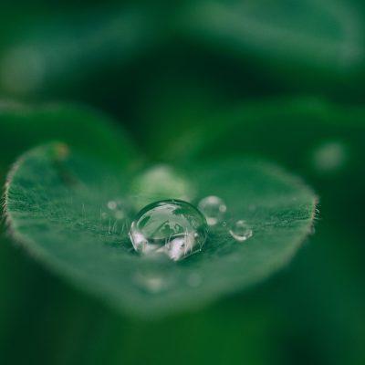 Grön växtlighet för att illustrera hållbara inköp